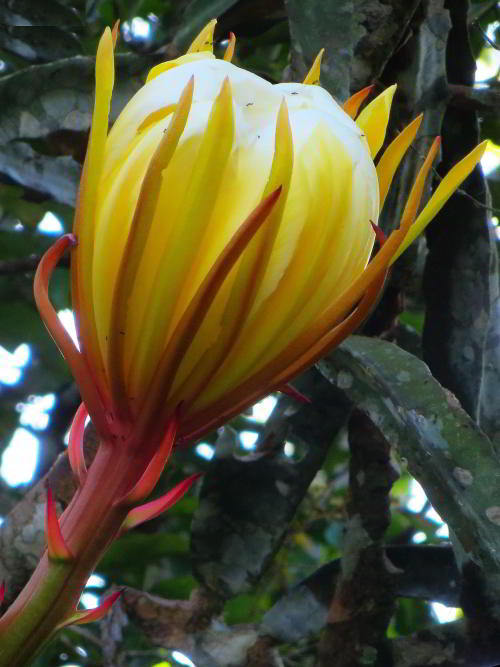 VACACIONES EN ECUADOR: Beautiful flowers enlighten Amazon visits in Ecuador.