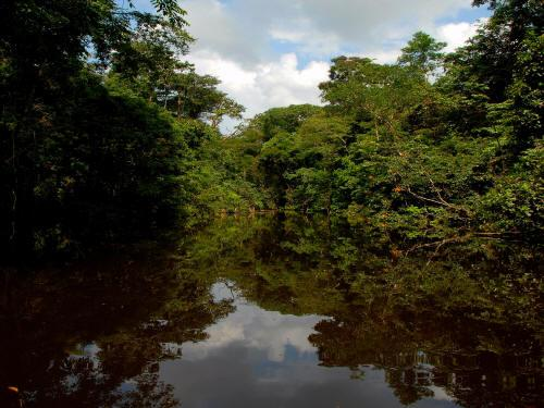 VACACIONES EN ECUADOR: the Imuyo River is the clearest black water river in the Amazon of Ecuador.