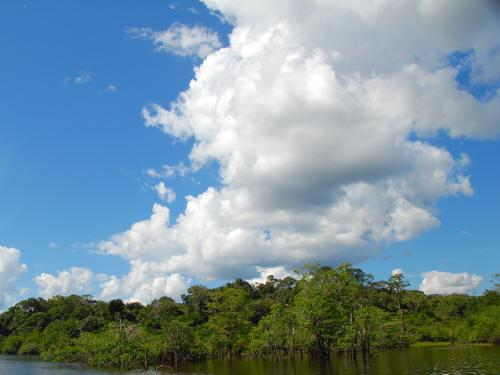 6 MEJORES VACACIONES ORIENTE DEL ECUADOR: extended swamps characterize the forest.