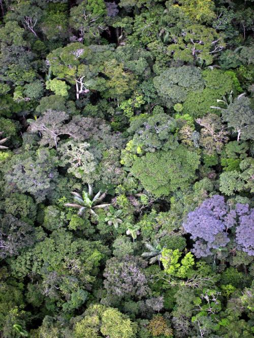 VACACIONES EN ECUADOR: Amazon jungle seen from the air.