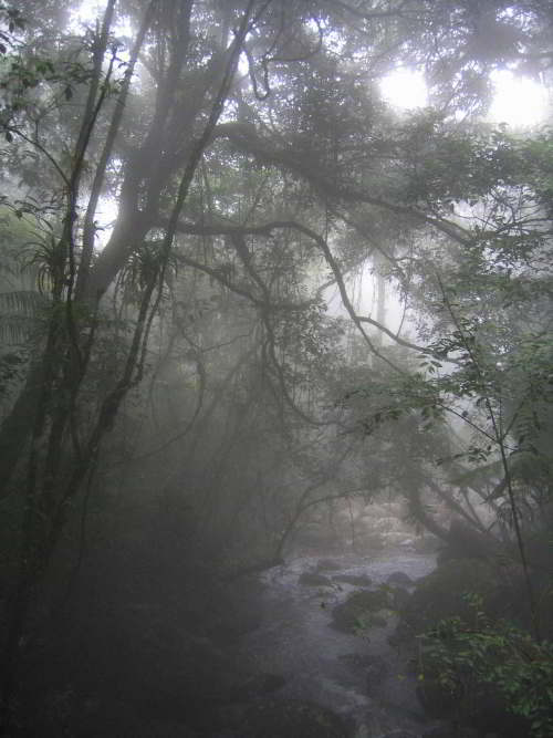Morning mist at Cuyabeno Wildlife Reserve