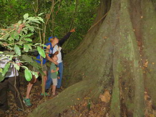CHURUTE MANGROVES ECOLOGICAL RESERVE, GUAYAQUIL: Fascinated with the roots of a ficus tree.