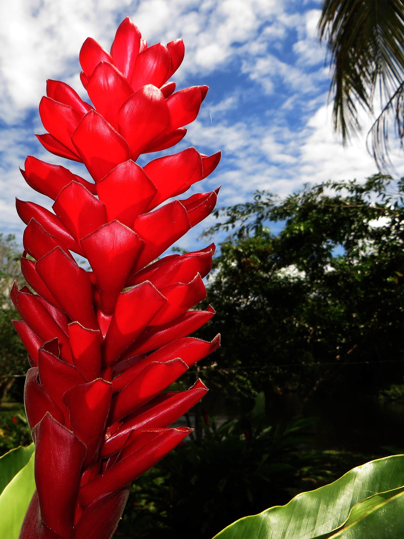 Cuyabeno national reserve ecuador 39 s amazon for Plantas ornamentales del peru