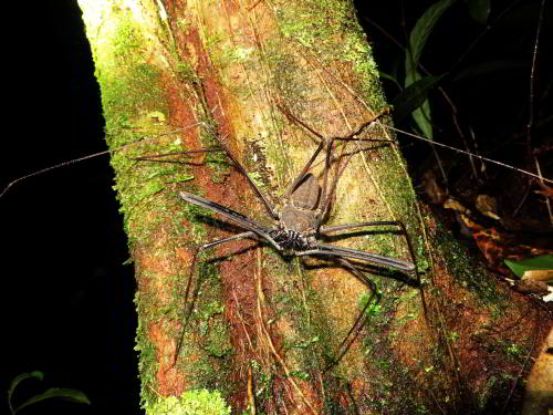 Visiting the Amazon in Ecuador: Nocturnal amazon animal found on an Amazon visit in Ecuador