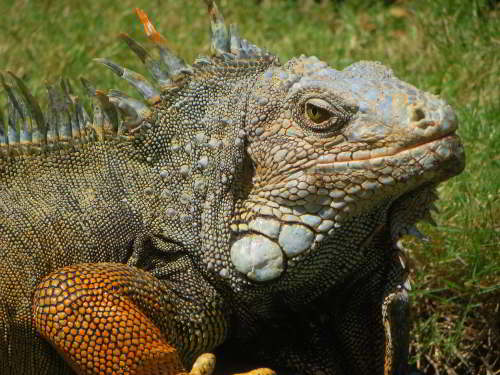 THINGS TO DO IN GUAYAQUIL CITY: Parque Iguana Park Catedral
