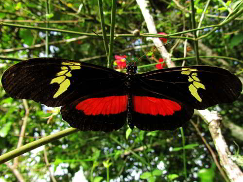 DIEREN VAN JUNGLE IN ZUID AMERIKA: Butterfly in the Amazon Jungle