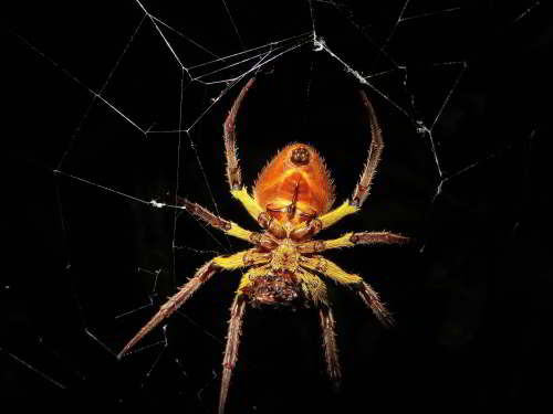 10 ANIMALES DEL AMAZONAS ECUATORIANO PELIGROSOS: Spiders in many shapes in the jungle
