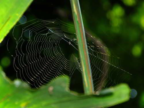 DIEREN VAN JUNGLE IN ZUID AMERIKA: Spider web.