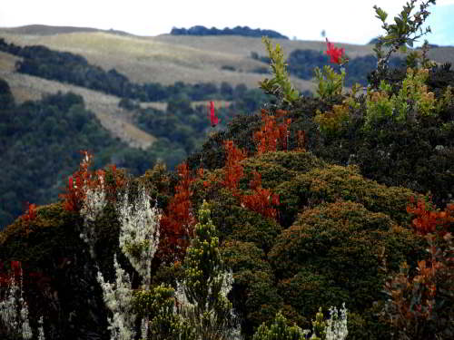PODOCARPUS NATIONAL PARK, LOJA, ECUADOR: Semi forested P�ramo.