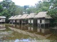CLIMAT DE LA FORÊT AMAZONIENNE [ÉQUATEUR], QUAND PARTIR?: In Cuyabeno, particularly the camp type lodges get flooded.