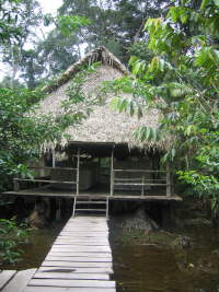 CLIMAT DE LA FORÊT AMAZONIENNE [ÉQUATEUR], QUAND PARTIR?:  In many of the cheaper lodges, frequent flooding is a problem, with resulting abundance of mosquitos.