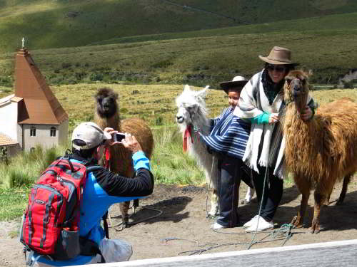 BEZIENSWAARDIGHEDEN QUITO: Lamas at Pichincha National Park