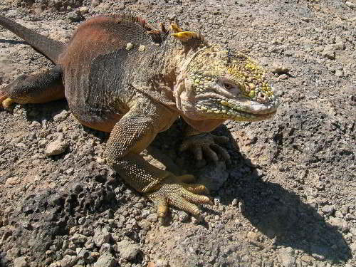 BEST TIME OF THE YEAR TO VISIT ECUADOR:  on Galapagos.