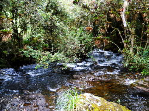 ECUADOR ANDES TREKKING TOUR [TREK TO 10 NATIONAL PARKS]: Creeks seen on Ecuador Andes Treks in Ecuador are crystal clear.