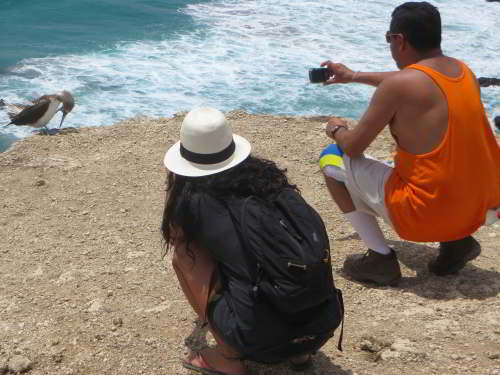 TOP 100 INTERESTING FACTS ABOUT ECUADOR: Tourists with Blue-footed Booby at cliff, Isla de la Plata.