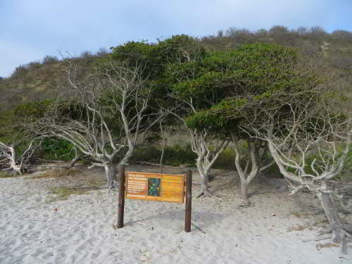 10,000 NATIVE FLOWERS OF ECUADOR [100 PICTURES]: Dry coastal shrubland Ecuador.